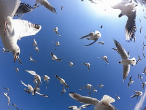 Gulls take off from a fish market in the Turkish capital, Ankara