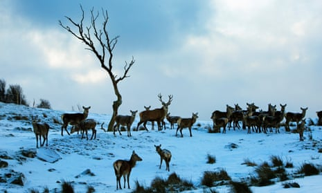 Red deer at the Highland Wildlife Park, Kingussie, Scotland