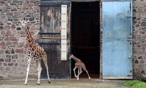 AFP PHOTO / Paul ELLISPAUL ELLIS/AFP/Getty Images