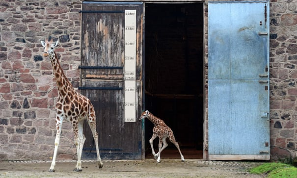 Why the world needs zoos | Science | The Guardian