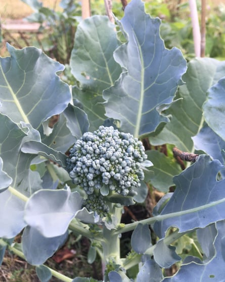 'One little green floret of broccoli has become my role model for survival. Though I'm sorry, mate, you're going to be eaten anyway.'