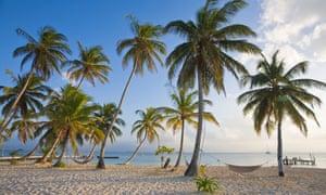 Frond imaginings … the San Blas Islands.