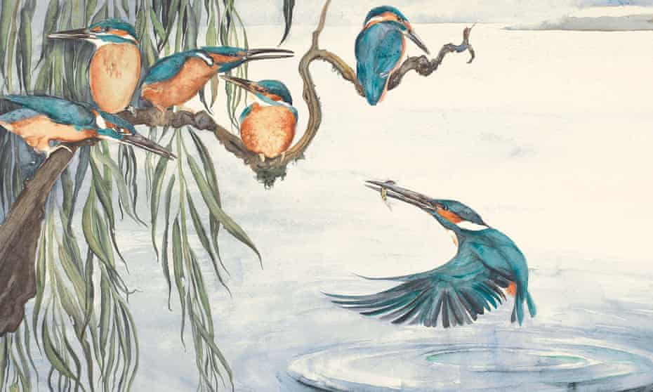 Branching out … Kingfishers in The Lost Words by Robert Macfarlane, with illustrations by Jackie Morris.