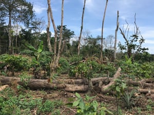 A decimated forest in Ivory Coast
