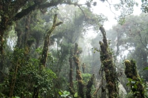 Trees in a misty rain forest on the Barva Volcano in Braulio Carrillo National Park, Costa Rica. Photo taken 14 November 2011.