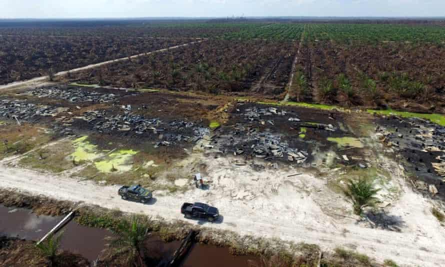 A fire-damaged plantation in Riau, Indonesia.