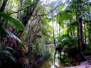 River in the Daintree rainforest, Queensland, Australia.