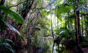 The federal government's efforts to make Daintree Rainforest world heritage listed was met by fierce resistance by the Queensland government, cabinet documents from 1988 reveal.