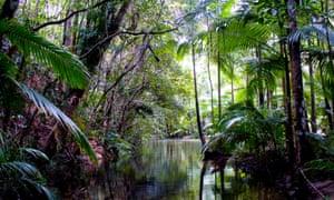 River in Daintree Rainforest, Queensland