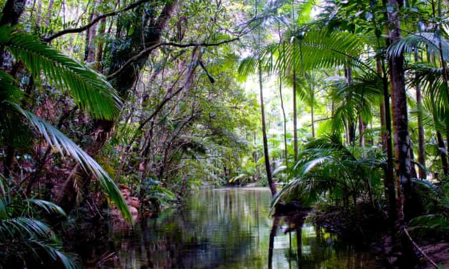 File photo of the Daintree rainforest in Queensland, Australia