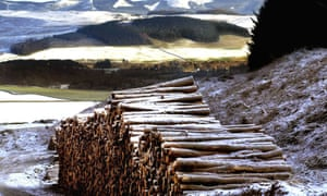 Logs piled high by a Scottish forest