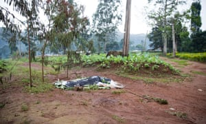 A covered corpse at the side of the road near Bamenda