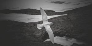 Bird flying over Antarctica, Justin Chambers,