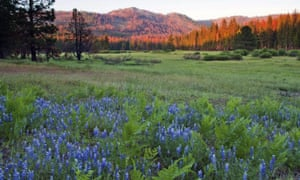 Ackerson Meadow in Yosemite