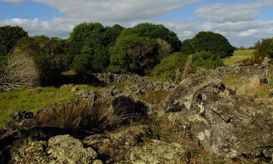 Volcanic rock at Otuataua Stonefields.