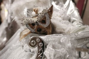 A bejewelled dog sits in a carriage