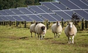 norfolk solar panel project