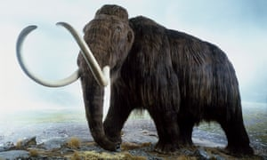 Researchers found that 69% of mammoth samples were male, an unusually skewed sex ratio.