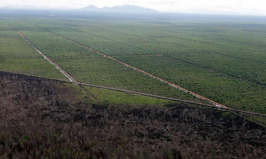 An aerial picture showing deforested land after fires in Central Kalimantan, Indonesia. Forest fires are an annual occurrence on Sumatra and Borneo but experts said this year's blazes have been especially bad because of the El Nino weather phenomenon.