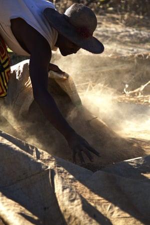 Harvesting rice in Antanandava