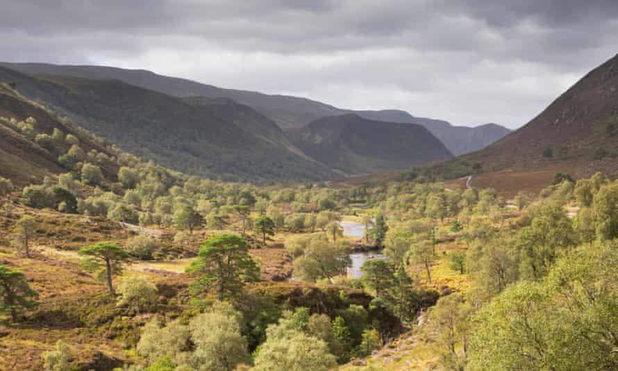 Woodland regenerating along glacial valley, Glen Mhor, Sutherland, Scotland.