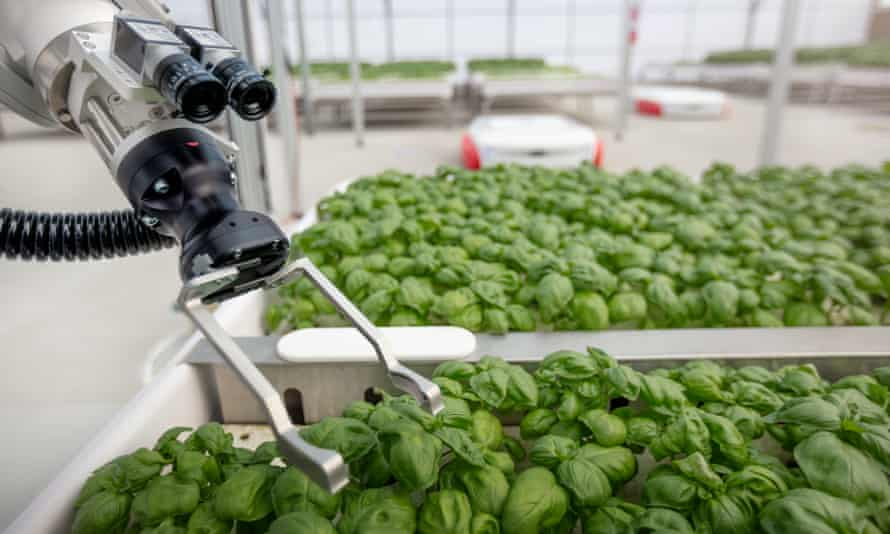 Iron Ox uses robots to produce food in greenhouses.