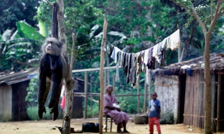 A dead monkey sold as bushmeat hangs outside a villager's house in north-east Gabon.