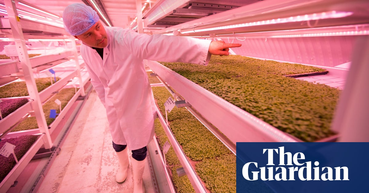 Growing underground: the fresh herbs sprouting beneath Londoners ...