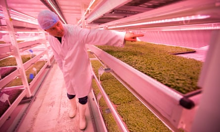 Growing Underground's produce is available from wholesalers, doorstep deliveries and markets.
