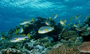 A school of fish in the Great Barrier Reef