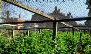 Alys Fowler: give fruit netting some TLC now, and help the