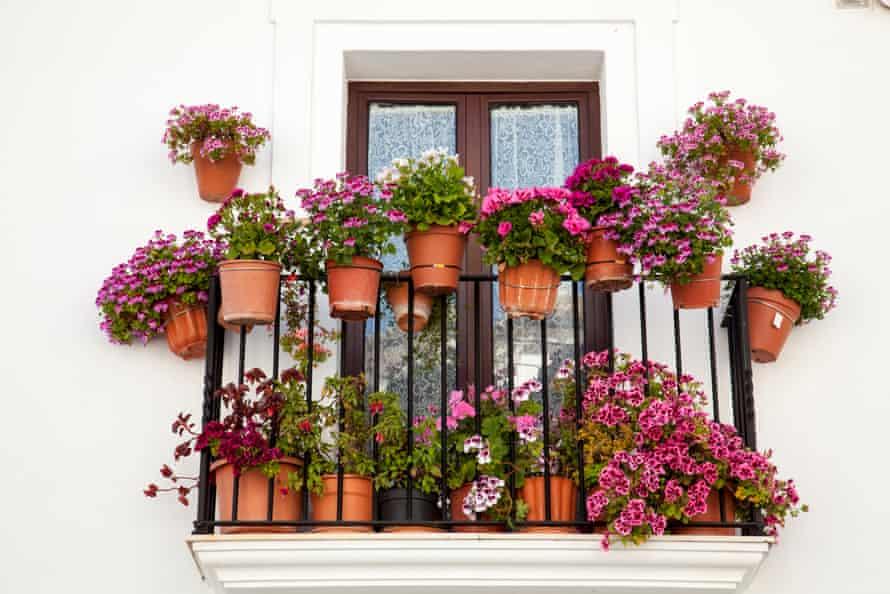 Flower pots on a window terrace inFlower pots on a white window terrace, Sierra de Grazalema, Cadiz, Andalusia, Spain