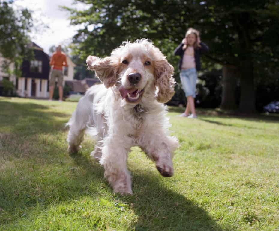 Finding and maintaining your dog's ideal weight can significantly extend your pet's life.