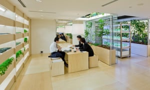 Office workers at Pasona Urban Farm in front of plant dividers