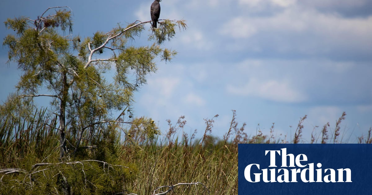 The Week In Wildlife In Pictures Environment The Guardian