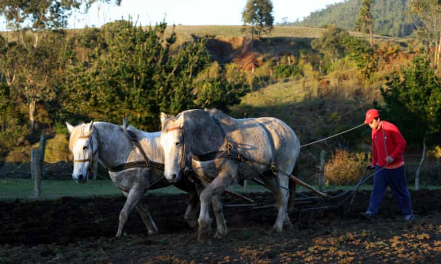 Young Chilean man using a team of horses to plow a field. Cobquecura, Biobio, Chile, South America.