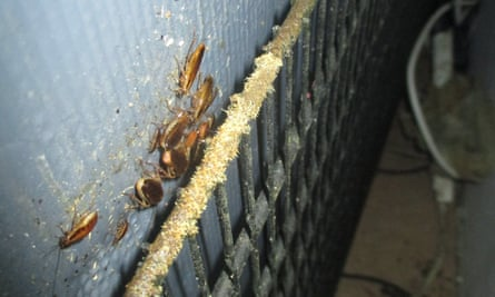 Cockroaches at Golden Dragon Chinese restaurant