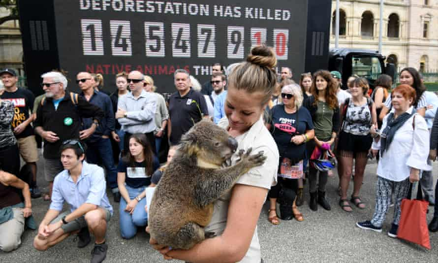 A protest against deforestation outside Queensland's parliament on Wednesday