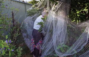 """Grandma and the Fruit Tree by Madeleine Waller """"These images are from a series of portraits of my mother in Australia. She takes great pleasure from her garden and since I only see her every few years, this is how I imagine her."""""""