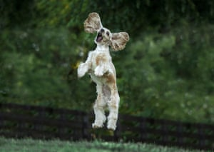 "Jim Zuckerman captured his dog in ""Jumping For Joy"" in Franklin, USA"