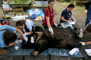 Veterinarians of the Four Paws animal welfare charity, check May, a female moon bear, during her rescue from a bear farm for bile trading in Ninh Binh province, Vietnam