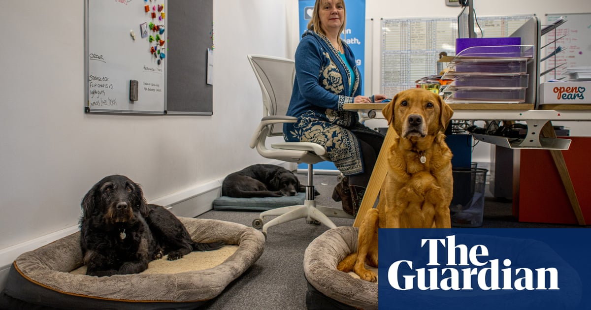The dogs keeping office workers company through lockdown