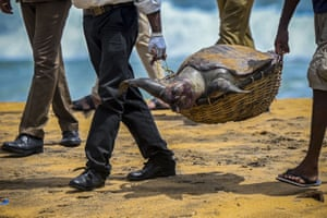 Wildlife officials carry away the carcass of a turtle that was washed ashore at the beach of Angulana, Sri Lanka. A container ship that caught fire while transporting chemicals off Colombo has been leaking into the coastal areas of Sri Lanka