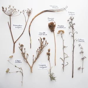 Seedheads from Dungeness.