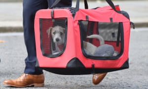 Dilyn the dog arrives in Downing Street.