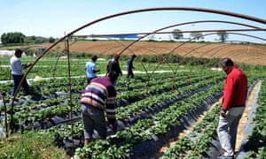 Migrant workers at a strawberry plantation near the Greek village of Manolada