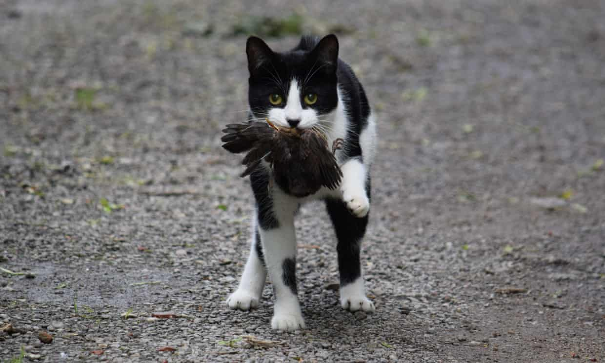 $1 Million Dollar Donation to Stop Feral Cats