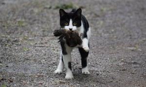 Feral cats kill one million native birds every night.