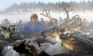 A Nenets herdsman gathers his reindeer as they prepare to leave a site outside the town of Nadym in Siberia. The Nenets people live in snow and freezing temperatures some 260 days of the year and are mainly nomadic reindeer herdsmen.