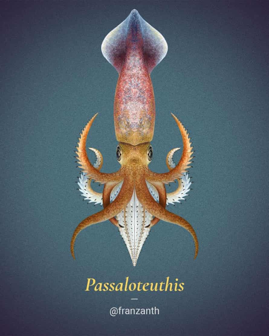 Passaloteuthis a genus of belemnite. Fossils show the presence of two huge hooks called mega-onychites the function and how they were attached to the body remains unknown